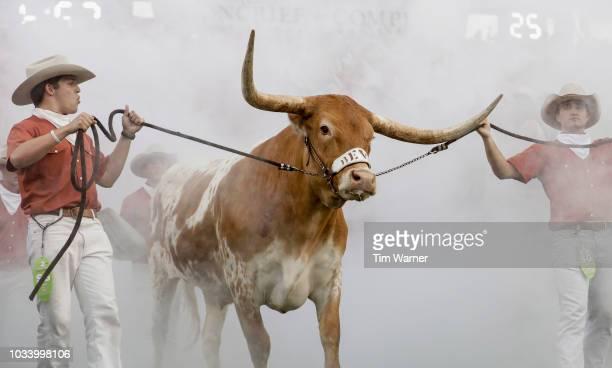 Texas Longhorns mascot Bevo XV enters the stadium before the game against the USC Trojans at Darrell K RoyalTexas Memorial Stadium on September 15...