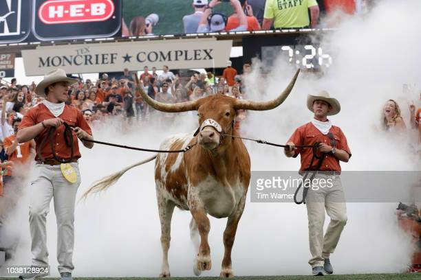Texas Longhorns mascot Bevo XV enters the stadium before the game against the TCU Horned Frogs at Darrell K RoyalTexas Memorial Stadium on September...