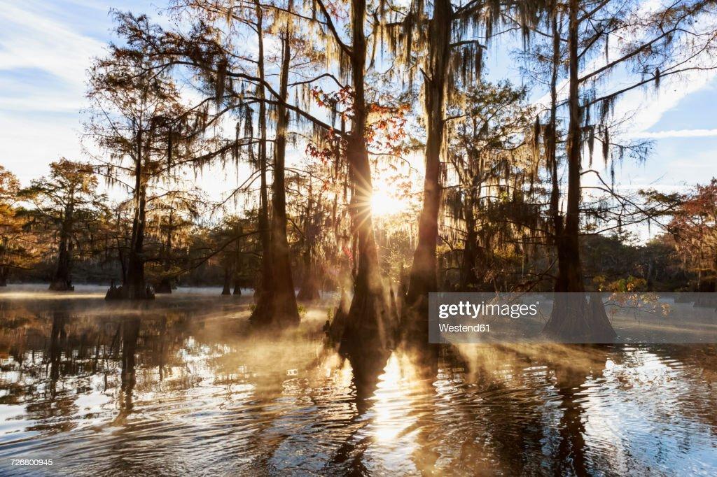 USA, Texas, Louisiana, Caddo Lake, Benton Lake, bald cypress forest : Stock Photo