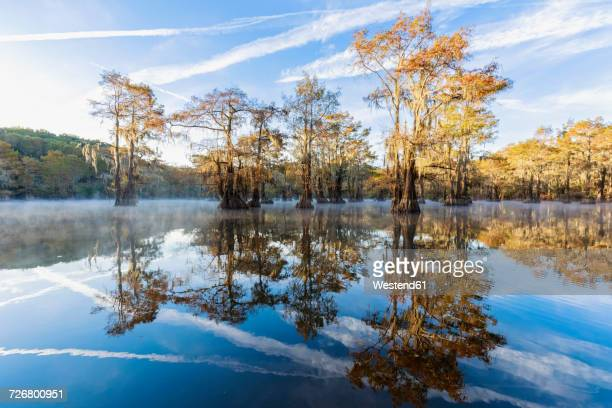 USA, Texas, Louisiana, Caddo Lake, Benton Lake, bald cypress forest