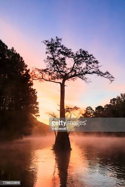 USA, Texas, Louisiana, Caddo Lake, Big Cypress Bayou, bald cypress forest at sunrise