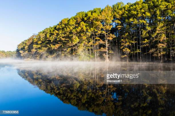 USA, Texas, Louisiana, Caddo Lake, Big Cypress Bayou, bald cypress forest