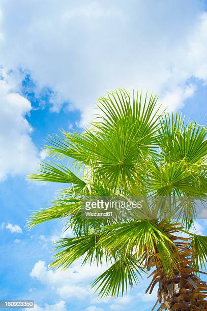 USA, Texas, Palm tree leaves against partly cloudy sky at Rio Frio