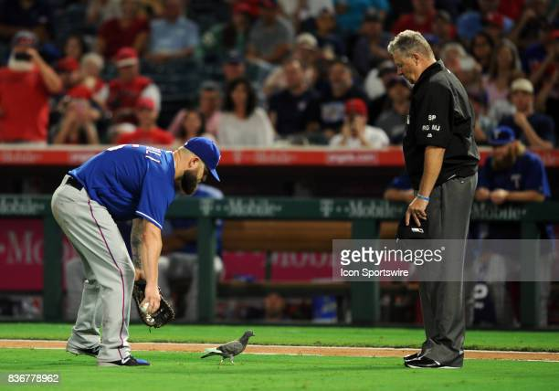 Texas Rangers first baseman Mike Napoli and first base umpire Gary Cederstrom try to get a pigeon off the field in the fourth inning of a game...
