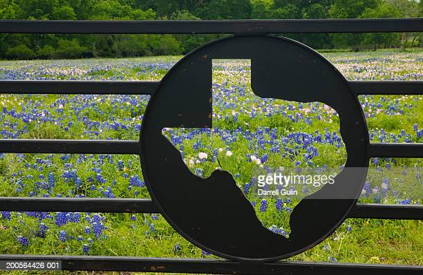 Texas symbol in gate with bluebonnets flower in background