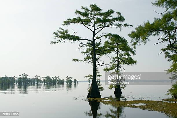 texas, your texas - caddo lake stock pictures, royalty-free photos & images