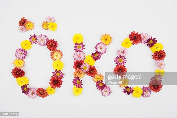 Text oeko with chrysanthemum flowers on white background