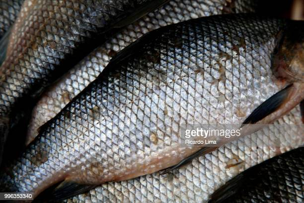 texture of curimatá scales. also knows as curimatã (prochilodus spp) is found in almost all over brazil. - fish scale pattern ストックフォトと画像