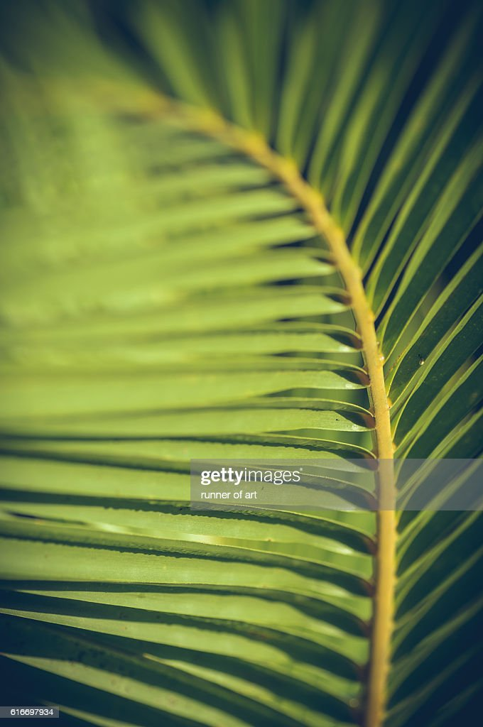 Texture of leaves : Stock Photo