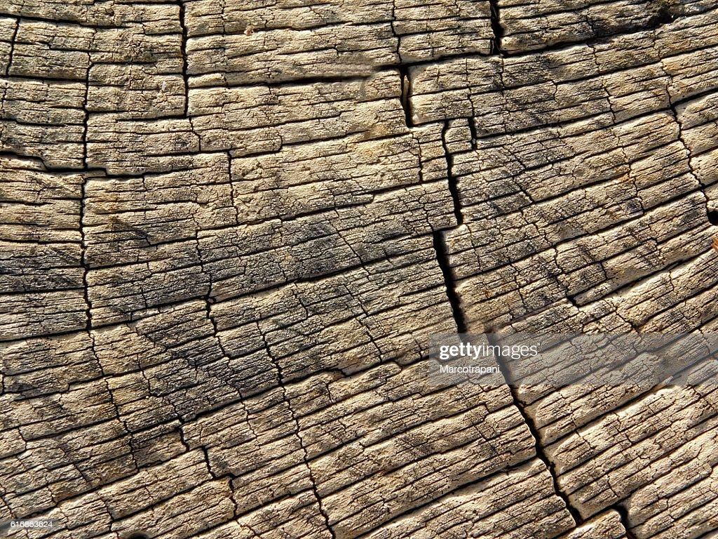 texture of tree trunk : Stock Photo