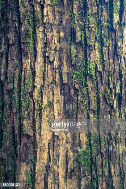 texture of trunk