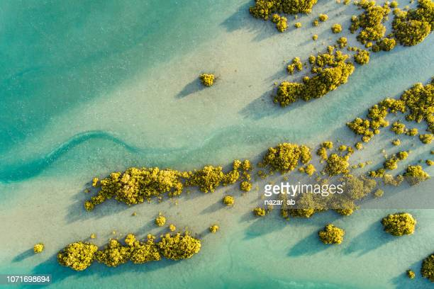 texture. - north island new zealand stock pictures, royalty-free photos & images