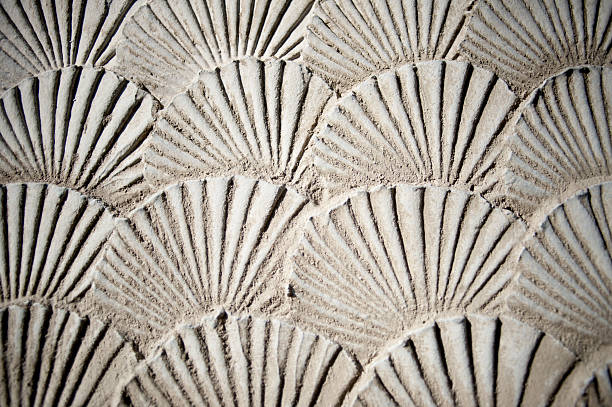 texture sea shells