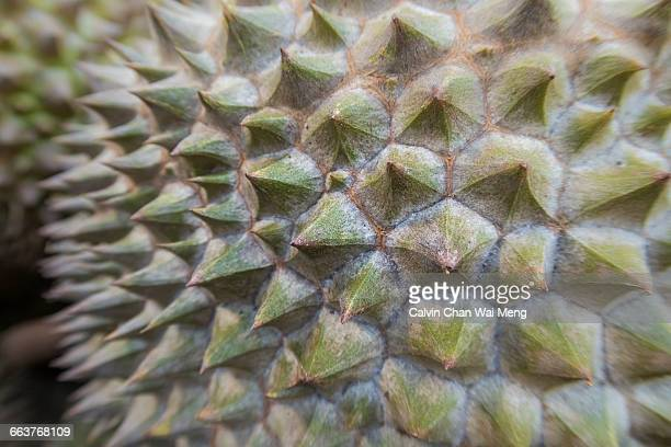Texture Series: Spiky