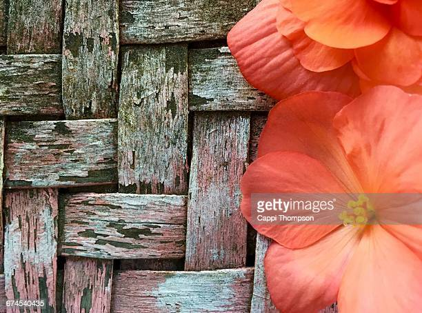 texture series: wood - cappi thompson stock pictures, royalty-free photos & images