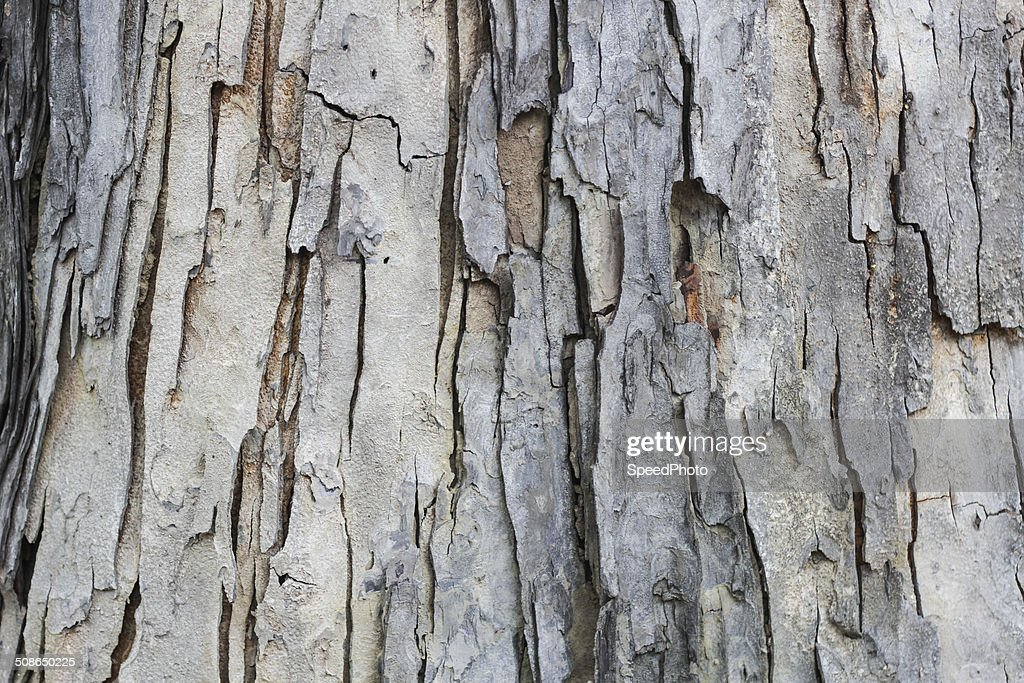 Texture tree : Stock Photo