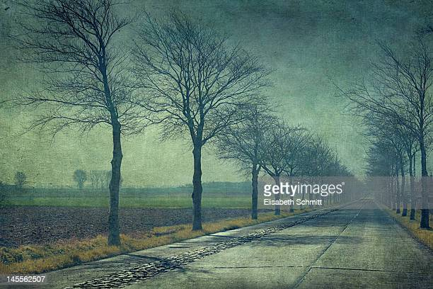 Texturized image of tree-lined road