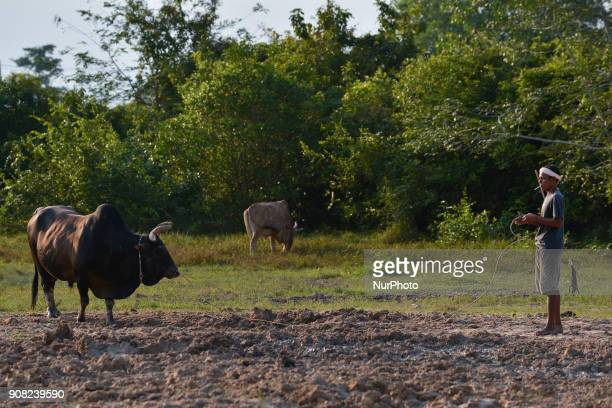 A Thai bull owner prepares his bull for a bullfight in Nakhon Si Thammarat Province Thailand on January 20 2018 Bullfighting is a popular past time...