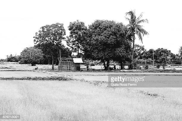 thai countryside - thailandia stock photos and pictures