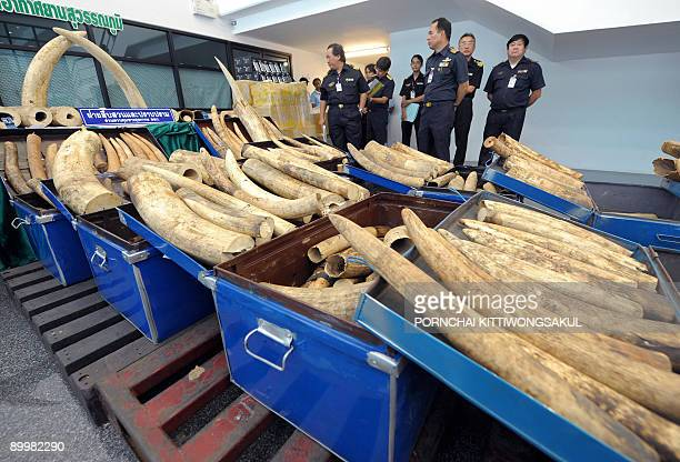 Thai custom officials inspect confiscated elephant tusks displayed during a press conference at the customs office of Suvarnabhumi airport in Bangkok...
