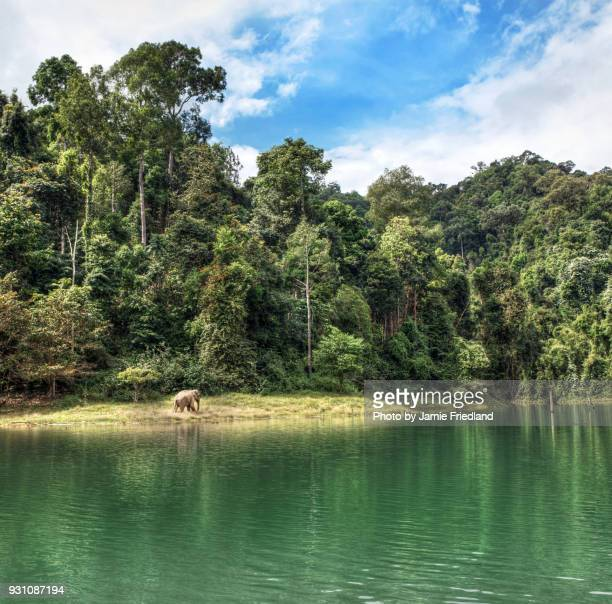 thai elephant - kao sok national park stock pictures, royalty-free photos & images