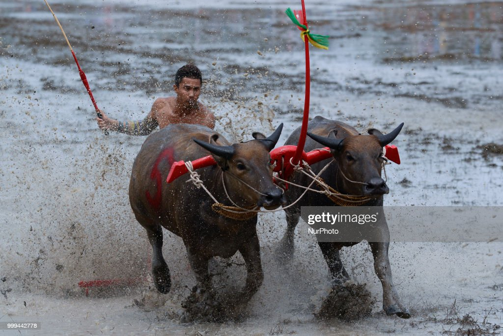 Chonburi Water Buffalo Racing Festival 2018