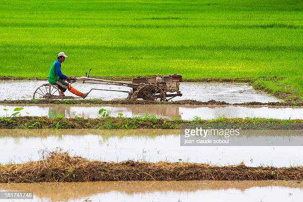 CONTENT] Thai farmer plowing rice fields in Chiang Rai the