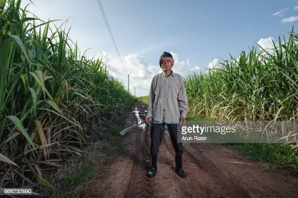 Thai farmer portrait on sugar cane field in Phu Khiao, Khon Kaen province, Thailand