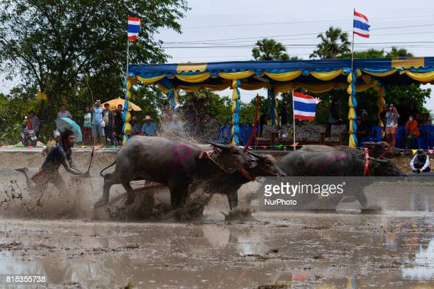 A Thai farmer racer during Water Buffalo Racing Festival in Chonburi province Thailand July 16 2017