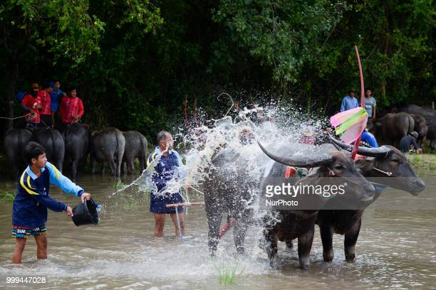 A Thai farmer water buffalo cool off from the heat his buffalo before a Water Buffalo Racing Festival in Chonburi Province Thailand July 15 2018