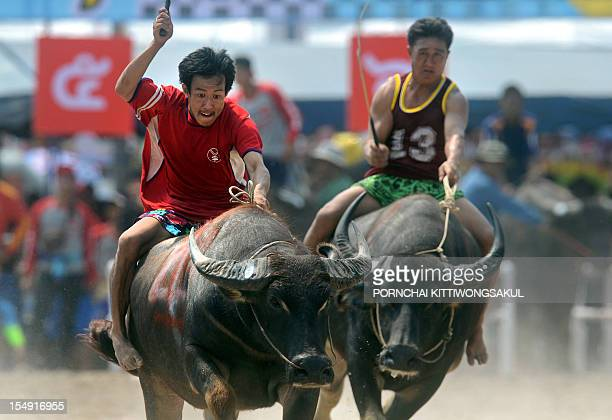 Thai farmers ride on buffalos during the annual buffalo racing festival in Chonburi province on October 29 2012 The annual race takes place at the...