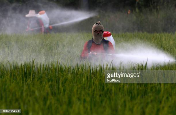 Thai farmesr spray pesticide over there rice field in Nakhon Sawan province north of Bangkok on November 17 2018