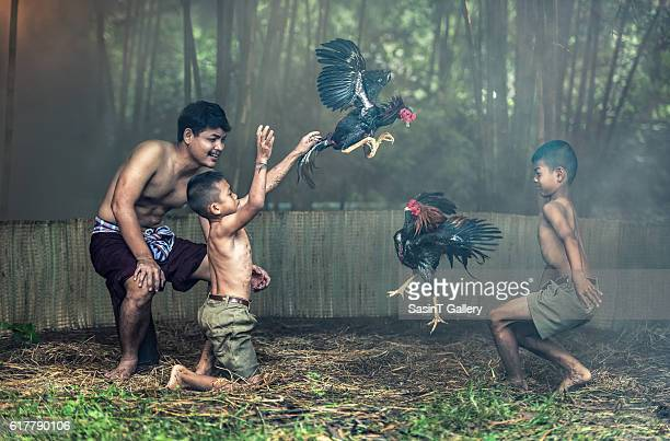 Thai local people with cock fighting
