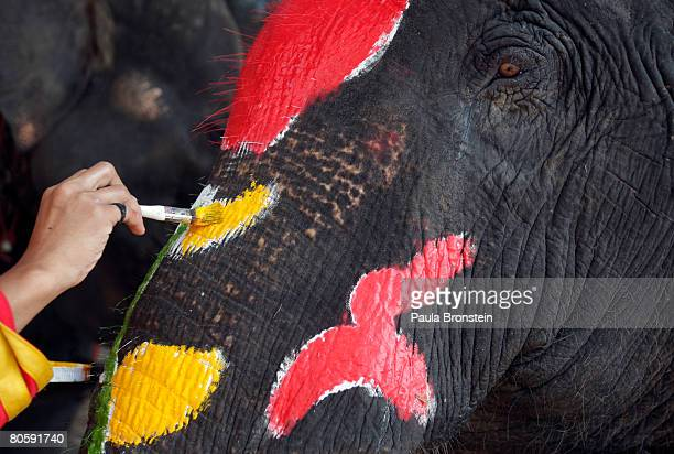 Thai mahout paints the face of an elephant in preparation for the upcoming Thai New Year on April 10 2008 in Ayutthaya Thailand Thai's are getting...
