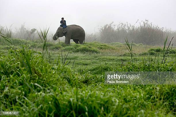 Thai mahout rides his elephant in the early morning fog at an elephant camp at the Anantara Golden Triangle resort on December 9, 2012 in Golden...