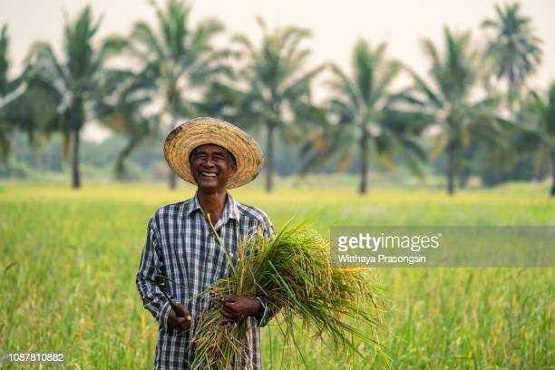 Thai male farmers who are happy to harvest rice in rural Thailand