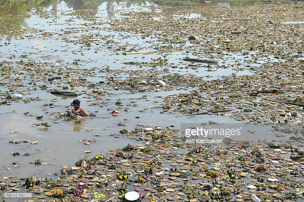 Thai man swims in the Ping river amidst a hundred tons of krathongs to find valuables during the Loy Krathong festival in Chiang Mai People place...