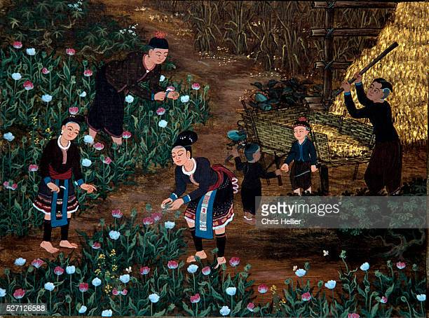 Thai miniature painting shows farmers scoring the pods of poppy plants. Harvesting of poppy plants in Thailand is done during the cold season,...