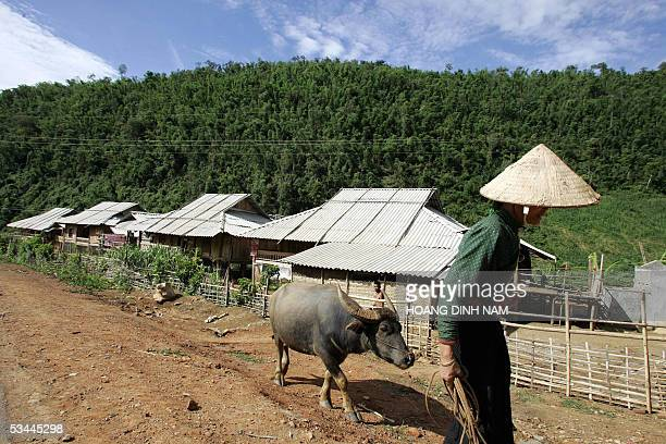 STORY VIETNAMENERGYENVIRONMENTDAM A Thai minority woman walks a buffalo past a row of resettled houses on stilts at the village of Muong Chum in the...