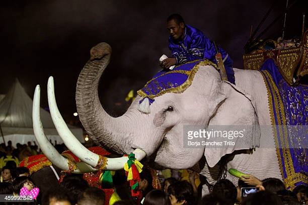 Thai people offer money and food as a prayer to a white elephant during a candle light ceremony for King's birthday at Sanam Luang on December 5 2014...