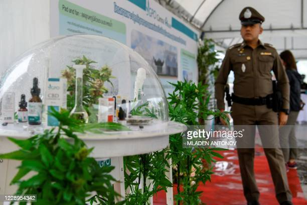 Thai police officer looks at cannabis made medical products at the Government Pharmaceuticals Organisation medicinal marijuana greenhouse outside...