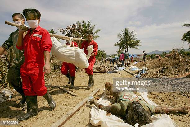 Thai rescue workers carry another body where hundreds of bodies have been recovered today and yesterday in the remote tourist resort on December 29...