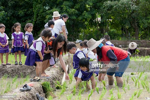 thai school children learning about growing rice. - very young thai girls stock photos and pictures