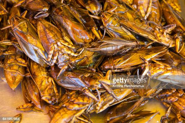 thai street food - insects - cockroach stock photos and pictures