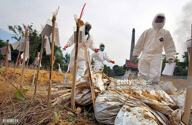 Thai volunteers recover a body wrapped in a cadaver bag at a mass grave for tsunami victims in Takua Pa town Phang Nga province in southern Thailand...