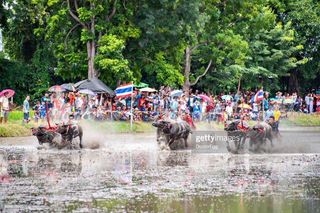 Thai Water Buffalo Racing Festival, Chonburi, Thailand : Stock-Foto