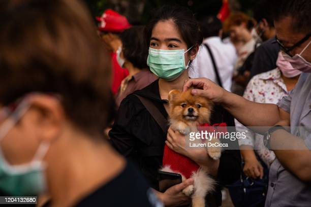 Thai woman wearing a surgical mask protests against the government with her dog amidst the global spread of the coronavirus at Kasetsart University...