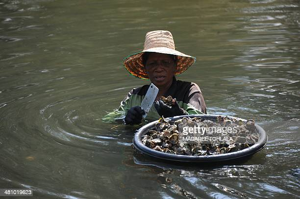Thai women use buckets as they collect oysters in the Narathiwat river in Thailand's southern province of Narathiwat on March 28 2014 With no end in...