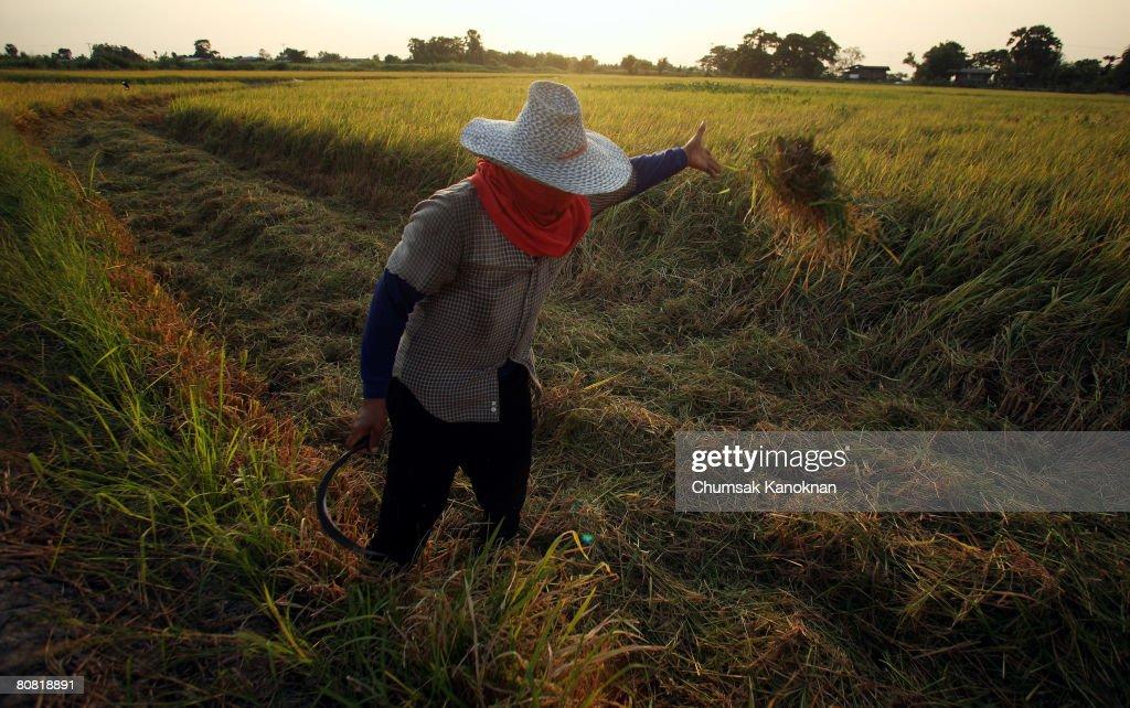 Thai Producers Struggle To Meet Increasing World Demand : News Photo