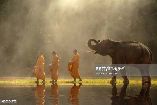 Thailand Buddhist monks walk collecting alms with elephant
